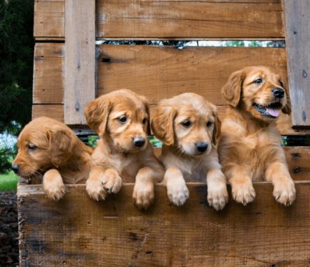 Hundetraining Welpenkurs