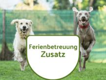Ferienbetreuung 2. Hund Shop