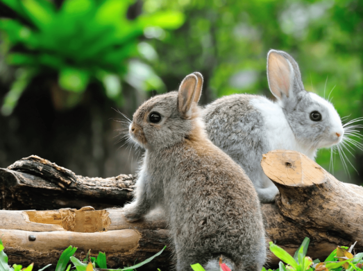 Kleintierbetreuung Hasen
