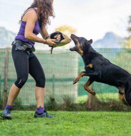 Hundewalk Training
