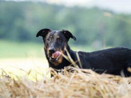 Gesunde Ernährung Hundewalk