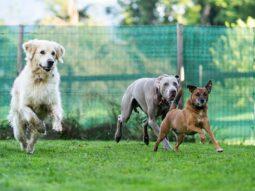 Glückliche Hundewalk Kunden